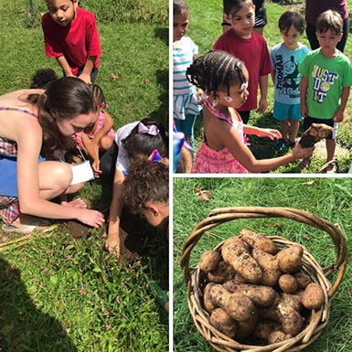 Children harvest potatoes at Macculloch Hall