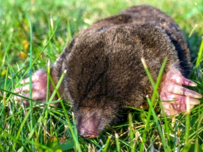 The Hidden Habitat of Moles