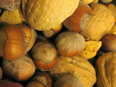 Friday Favorites: A Fall Harvest of Acorns and Other Tree Nuts Used by Indigenous People